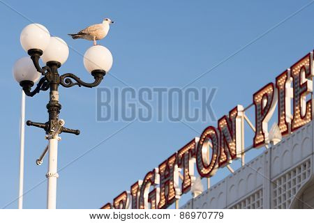 Bird on a lampstand