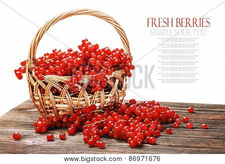 Fresh Berries Red Currant In A Basket Isolated On A White Background