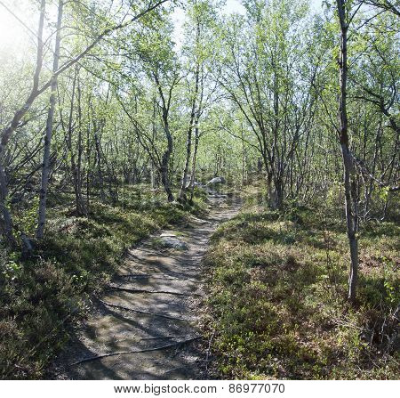 Nordic trail, travel on foot in the mountain.