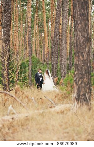 Newlyweds Walk In The Woods