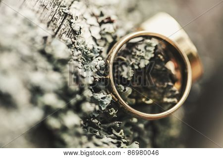 Tree Bark And Wedding Rings