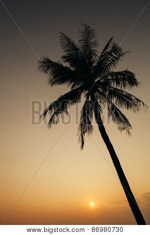 Sunset With Palm Silhoutte