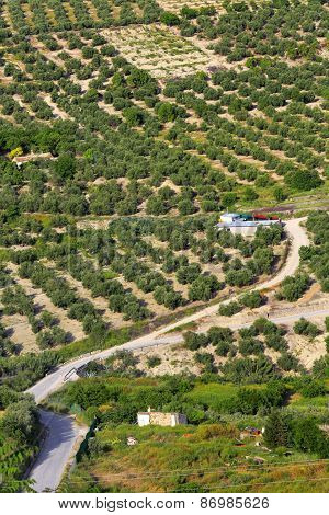 Landscape, olive groves, Ubeda, Andalusia, Spain