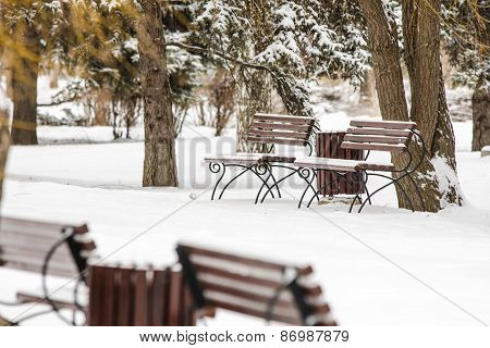 Winter Landscape Park With Benches In Foreground