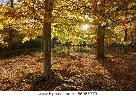 Colorful Autumn Park with Sun Shining Through Trees
