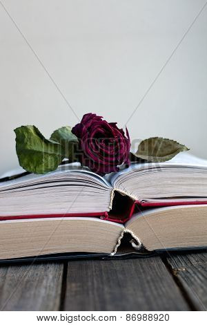 Dried Rose Laying Over An Open Book