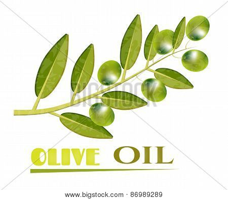 Olive, green twig with olives, text Olive Oil, white background