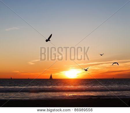 Seagulls And Sailboats At Sunset
