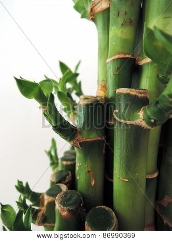 bamboo sticks tight together close up