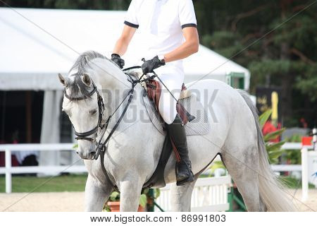 Portraot Of White Horse During Competition