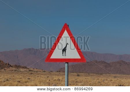 Roadsign Giraffe Crossing In Africa