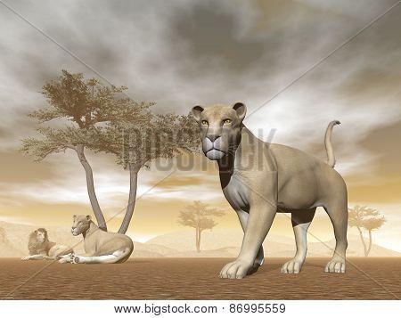 Lions in the savannah - 3D render