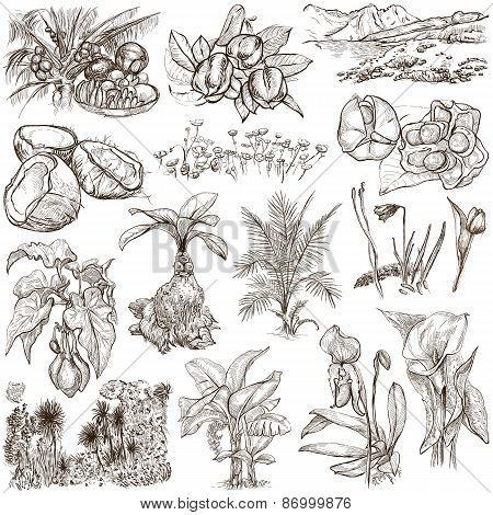 Flowers, Trees, Plants - An Hand Drawn Pack. Originals.