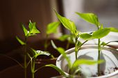 picture of seed  - Agriculture Seeding Plant seed growing concept selective focus - JPG