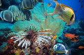pic of fire coral  - Colorful underwater offshore rocky reef with coral and sponges and small tropical fish swimming by in a blue ocean - JPG