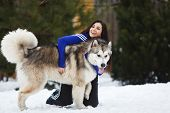 stock photo of sled-dog  - Woman with two dogs breed of malamute at winter time - JPG
