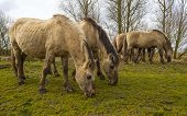 stock photo of herd horses  - Herd of horses in nature in a cloudy spring - JPG
