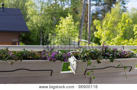 Flower Pots On The Balcony.