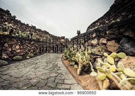 cactus garden in Guatiza, Lanzarote, Canary Islands, Spain