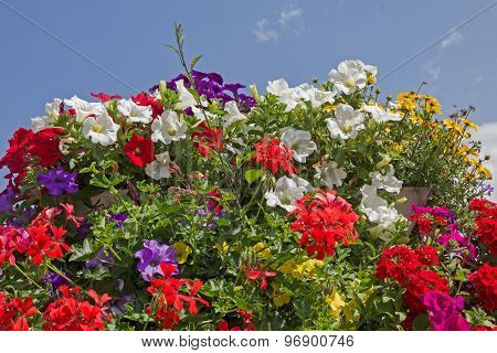 Geraniums, Petunias And Bidens, Against Blue Sky