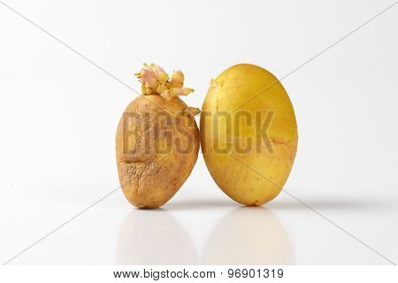 young and old sprouting potatoes on white background