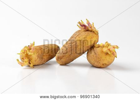 three old sprouting potatoes on white background