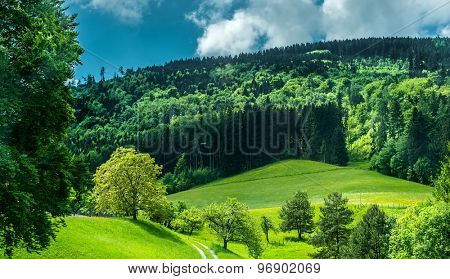 wonderful green mountain meadow with forest on background