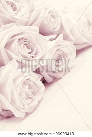 Beautiful Pink Roses Toned In Sepia As Wedding Background. Soft Focus. Retro Style