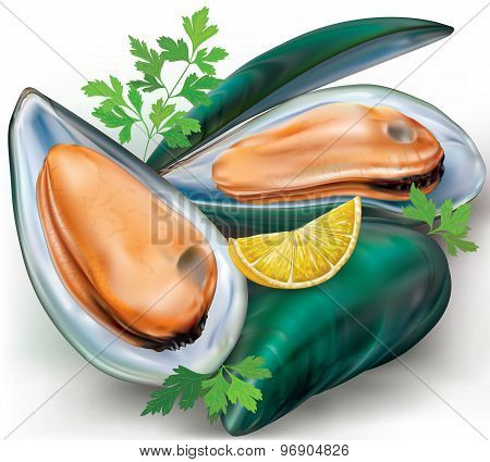 Mussels And Shell
