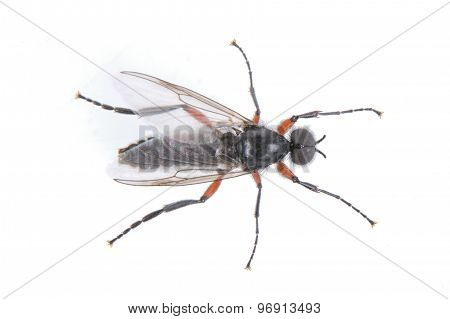 Fly With Long Foots On A White Background