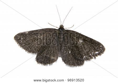 Black Butterfly On A White Background