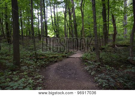 a path in the woods.