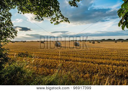freshly cut straw bales in a field at sunset