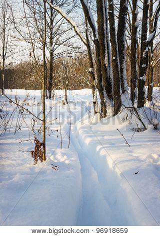 Ski Track In Deep Snow