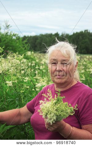 Woman Picking Flowers Meadowsweet In Meadows