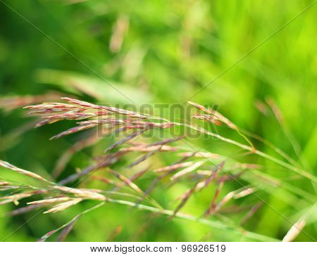 Green grass meadow background with soft focus