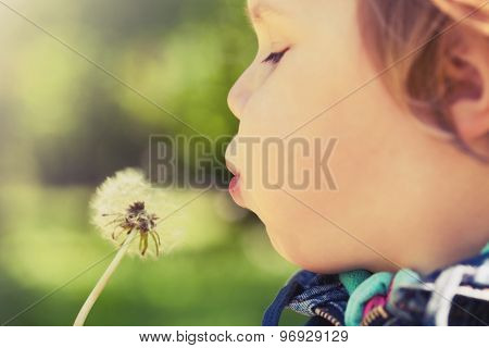 Caucasian Blond Baby Girl Blows On A Dandelion Flower