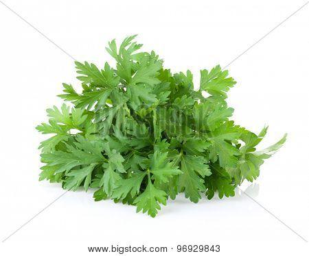 Fresh garden herbs. Parsley. Isolated on white background
