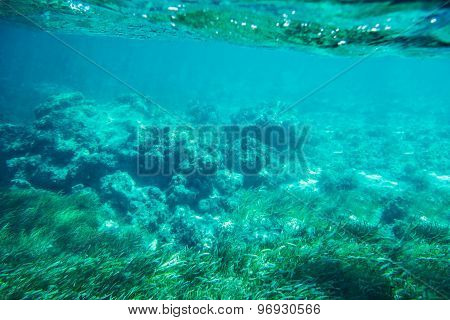 Underwater Seabed Reef Background
