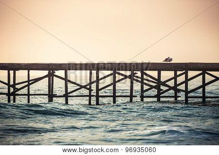 Sea Birds Looking From A Water Bridge