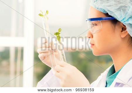 Examining Sprouts