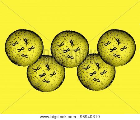 Olympians Yellow Microbes