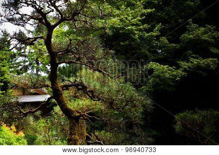 Twisted, leafless tree