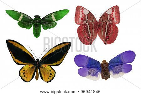 macro of four butterflies isolated on white background