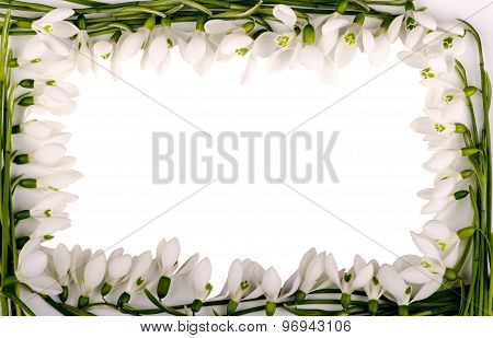 Frame from flowers of snowdrops on a white background