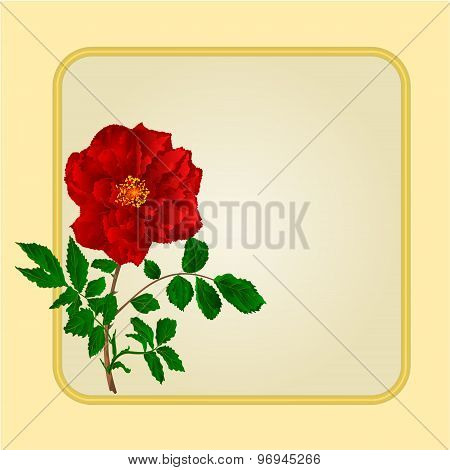 Golden Frame With Red Rose VectorGolden frame with  red  rose greeting card festive background place