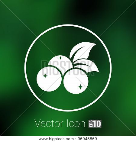 blueberry farm juicy illustration logo symbol vector