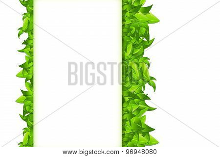 Isolated Leaves On White
