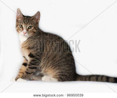 Tabby Kitten Sitting On Gray
