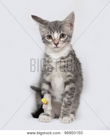 Sick And White Striped Kitten Sitting On Gray
